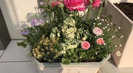 シャンべリールの春の花