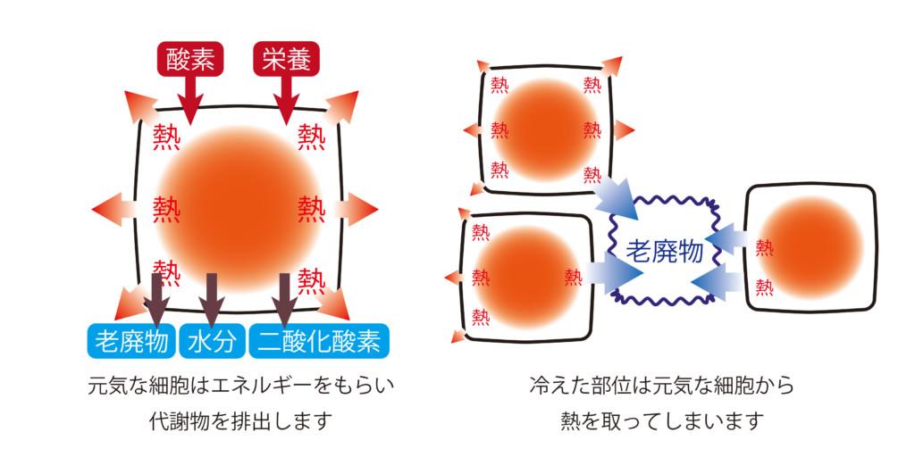 元気な細胞と老廃物のエネルギー交換図